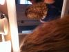 New curls